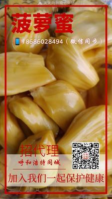内蒙古自治区呼和浩特市回民区海南菠萝蜜 15斤以上