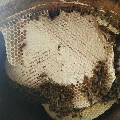云南省普洱市景谷傣族彝族自治县土蜂蜜 塑料瓶装 2年以上 100%