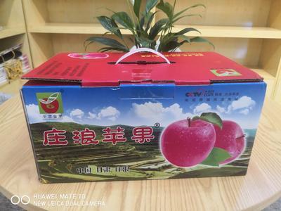 甘肃省平凉市庄浪县红富士苹果 75mm以上 片红 光果