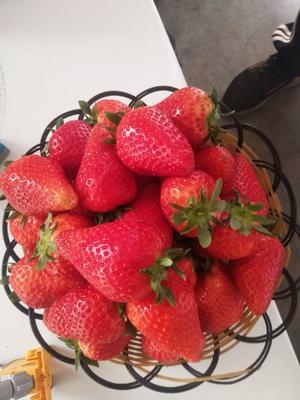 山东省日照市莒县拉松6号草莓 20克以上