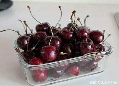 这是一张关于俄罗斯8号樱桃苗  品种纯正 包成活全国包邮的产品图片