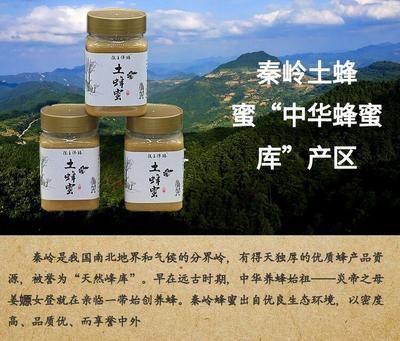 甘肃省陇南市宕昌县土蜂蜜 塑料瓶装 2年以上 98%