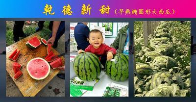 山东省潍坊市寿光市乾德新甜早熟西瓜种子 二倍体杂交种 ≥90%