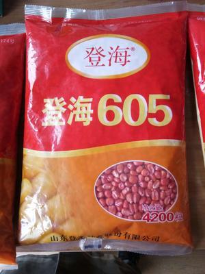 河南省郑州市金水区登海6188玉米种子 单交种 ≥85%