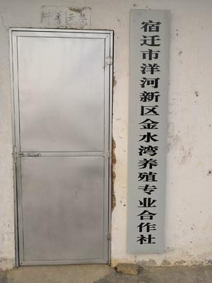 这是一张关于草鱼苗 的产品图片