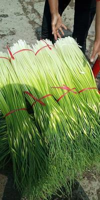 这是一张关于白帽蒜薹 60~70cm 的产品图片