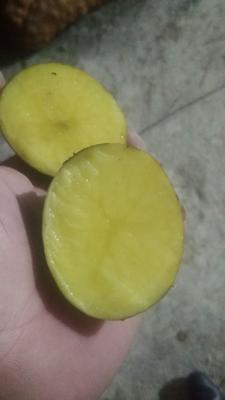 这是一张关于黄心土豆 1~2两 的产品图片
