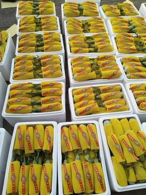 这是一张关于羊角蜜甜瓜 0.5斤以上 的产品图片