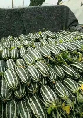 这是一张关于博洋9号甜瓜 0.5斤以上 的产品图片