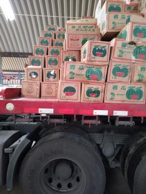 天津西青区甜王西瓜 8斤打底 9成熟 1茬 有籽