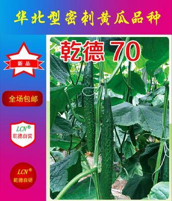 这是一张关于乾德70黄瓜种子 杂交种 ≥90% 的产品图片