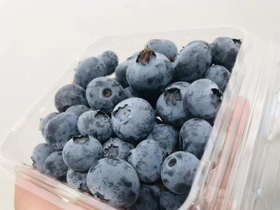 云南省昆明市官渡区南高丛蓝莓 6 - 8mm以上 鲜果