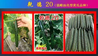 这是一张关于乾德20黄瓜种子 杂交种 ≥90% 的产品图片