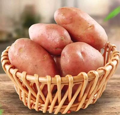 云南省昆明市嵩明县红土豆 1两以上