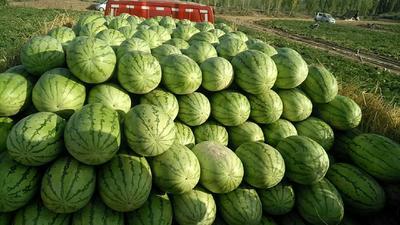 新疆维吾尔自治区昌吉回族自治州昌吉市金城5号西瓜 15斤打底 8成熟 1茬 有籽