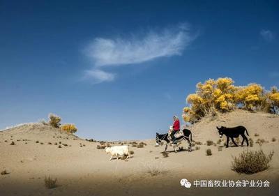 这是一张关于新疆驴 400-500斤 的产品图片