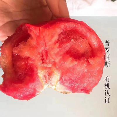 山东省烟台市海阳市普罗旺斯番茄 精品 弧三以上 硬粉