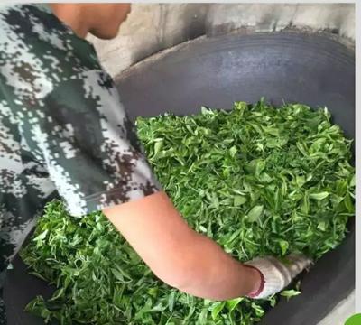 广西壮族自治区来宾市金秀瑶族自治县忙肺大叶茶  小青柑浓香茶