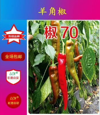 这是一张关于椒70辣椒种子 杂交种 ≥85% 的产品图片