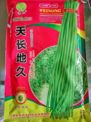 江苏省宿迁市沭阳县天长地久油绿豆角种子 ≥90%