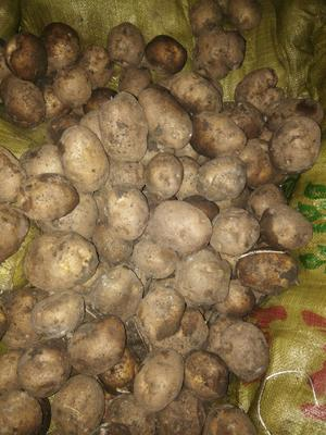 黑龙江省齐齐哈尔市讷河市延薯 1~3两