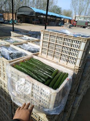 这是一张关于密刺黄瓜 35~45cm 的产品图片