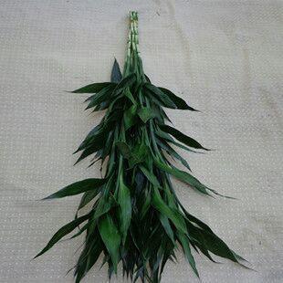 这是一张关于富贵竹 的产品图片