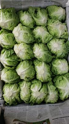 云南省昆明市西山区奶油生菜 2~3两