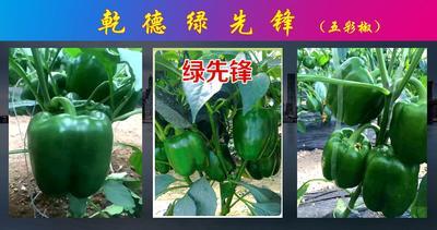 这是一张关于绿先锋彩椒种子甜椒种 杂交种 ≥85% 的产品图片