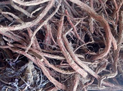 这是一张关于血参 的产品图片