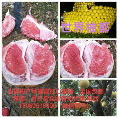 福建省漳州市平和县红心柚 2.5斤以上