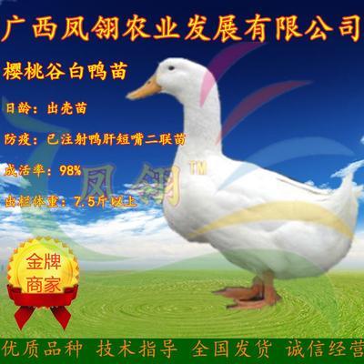 广西壮族自治区南宁市兴宁区樱桃谷肉鸭苗 樱桃谷大白鸭