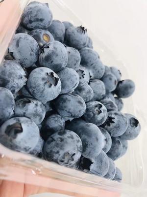 云南省昆明市官渡区南高丛蓝莓 8 - 10mm以上 鲜果