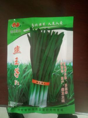河南省周口市扶沟县韭菜种子 nullnull