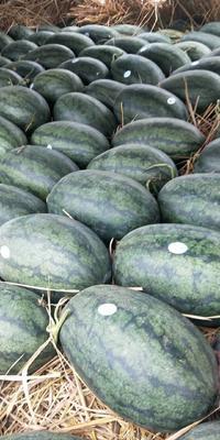 广西壮族自治区南宁市江南区黑美人西瓜 7斤打底 8成熟 1茬 有籽