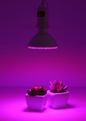 广东省广州市荔湾区植物补光灯