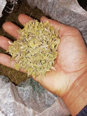 这是一张关于石橄榄  石橄榄干的产品图片