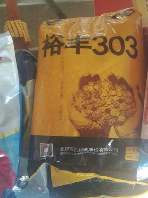 河南省商丘市睢阳区裕丰303玉米种子 三交种 ≥90%