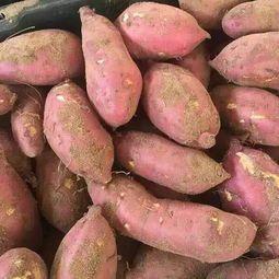 海南省海南省陵水黎族自治县紫板薯 1斤以上
