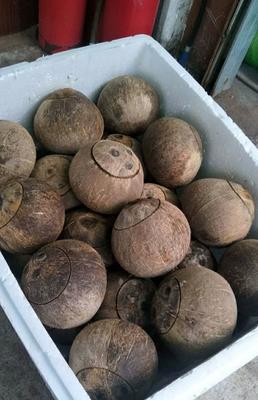 广东省佛山市顺德区毛椰  1.5 - 2斤 2--3斤,3斤以上