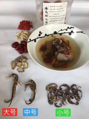 广东省阳江市阳西县海龙马汤