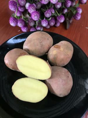 云南省昆明市东川区红土豆 统货