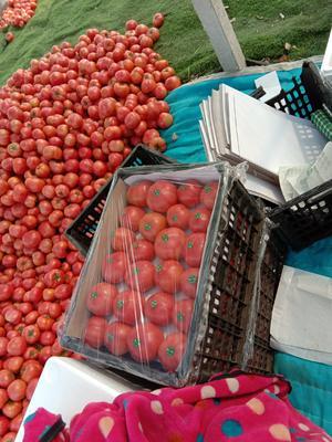 这是一张关于粉果番茄 通货 弧二以上 硬粉 的产品图片
