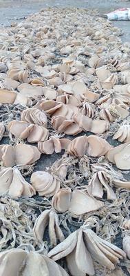 广西壮族自治区钦州市钦南区芥菜干 24个月以上