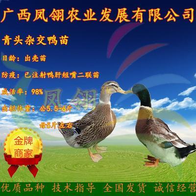 广西壮族自治区南宁市兴宁区杂交鸭苗 青头杂交鸭