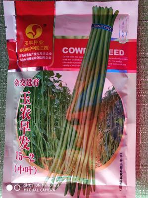 湖北省武汉市武昌区长青豆角种子 ≥90%
