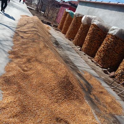 这是一张关于混合玉米粒 杂质很少 水份17%-20% 的产品图片