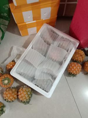 云南省红河哈尼族彝族自治州河口瑶族自治县香水菠萝  1 - 1.5斤 每箱7~8个菠萝,含箱称重八斤