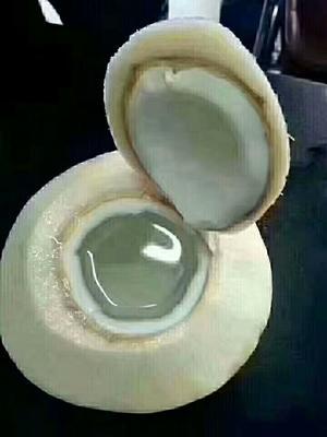 海南省海南省文昌市椰青 2.5 - 3斤