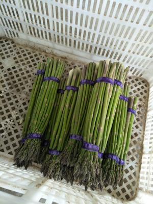 这是一张关于绿芦笋 20~30cm 的产品图片